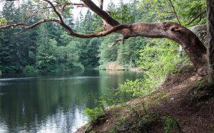 Whistle Lake