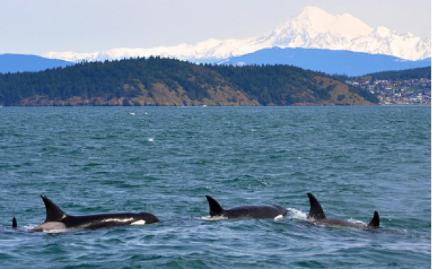 Island Adventures Whale Watching Package
